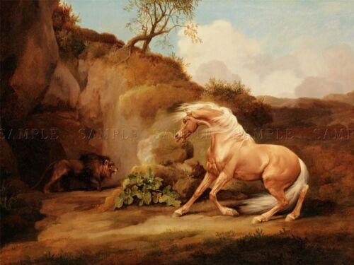 PAINTING ANIMAL GEORGE STUBBS LION STARTLING HORSE ART PRINT LAH400A