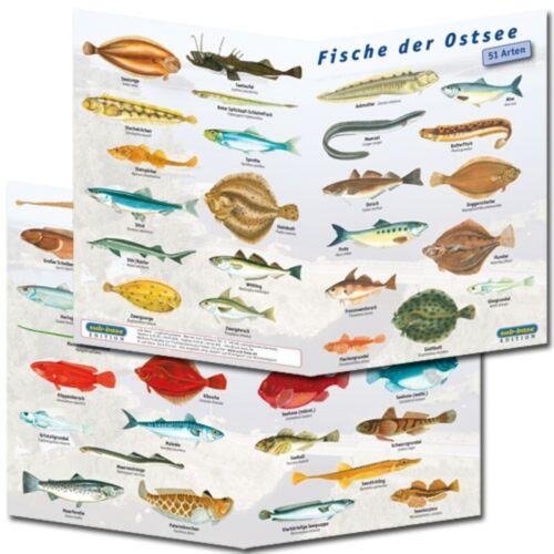 Fischfaltblatt Ostsee Fischbestimmungskarte
