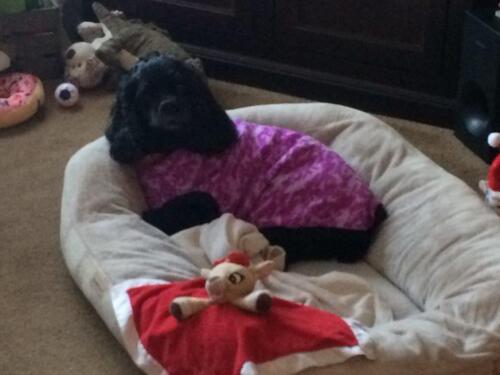 Pansy+Binks Fleece Dog Sweaters also seller of DGG Warmie