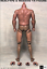 GangHood 1.0█1//6 Muscular Figure Body for Bane Arnold Wolverine Logan Head play