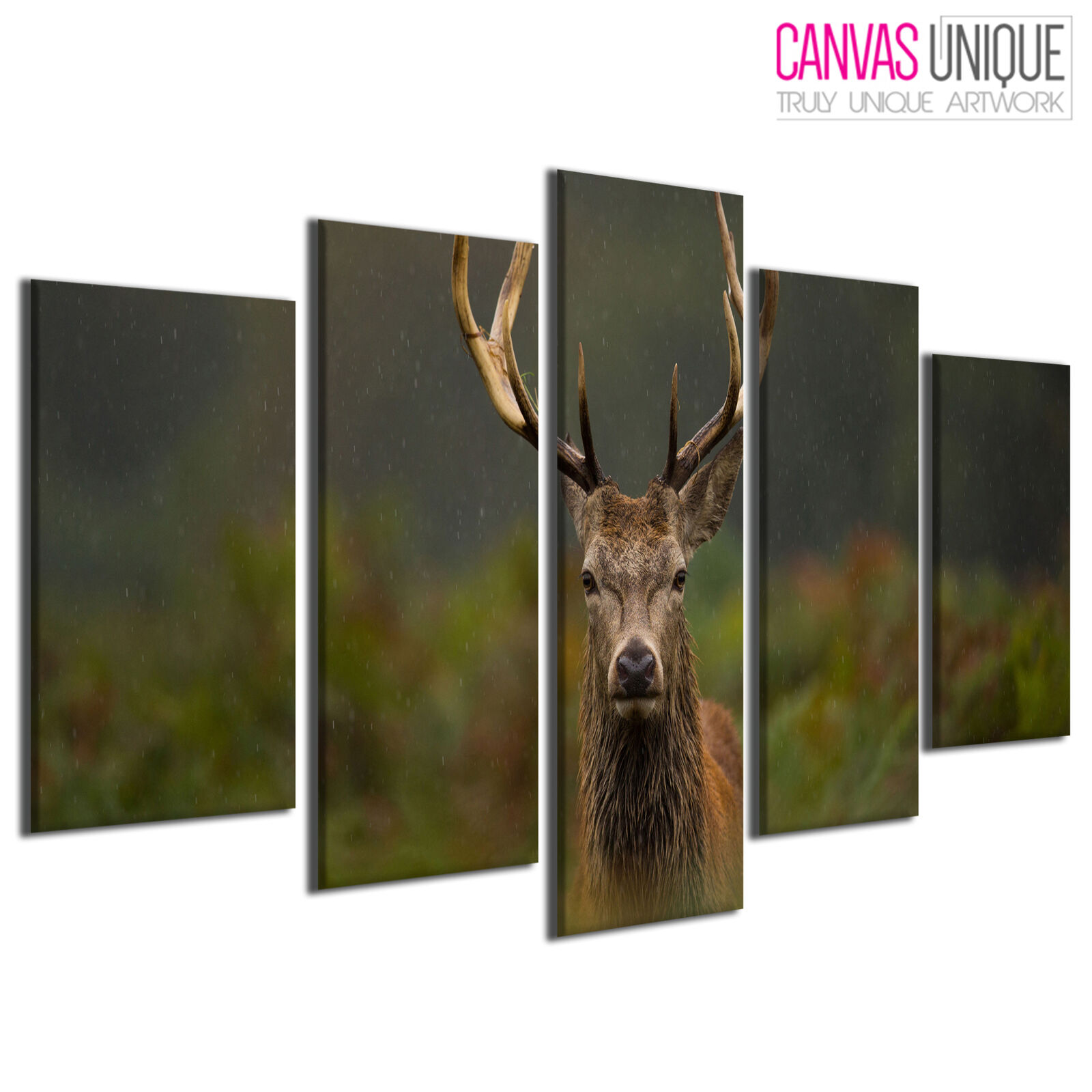 5PA521 Stag Deer Grassland Raining Animal Multi Frame Canvas Wall Art Print