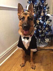 Dog-New-TUX-TUXEDO-WEDDING-Costume-Bow-Tie-white-shirt