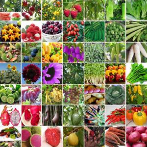 200tlg-Gemischt-Tomatensamen-Hausgarten-Gemuese-Obst-Samen-Saatgut-Mix-Seeds-Pack