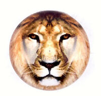 Brown Glass 18mm Snap Charm Lion School Interchangeable Charm For Ginger Snaps