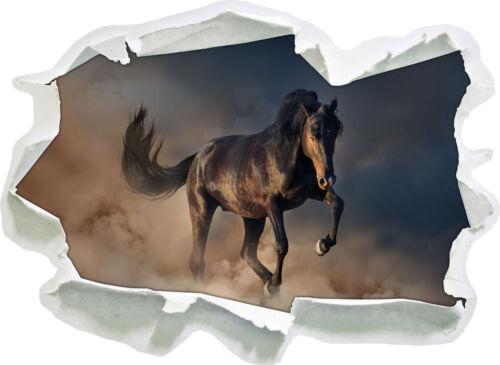 Caballo negro 3d-Look papel murales pegatinas-sticker