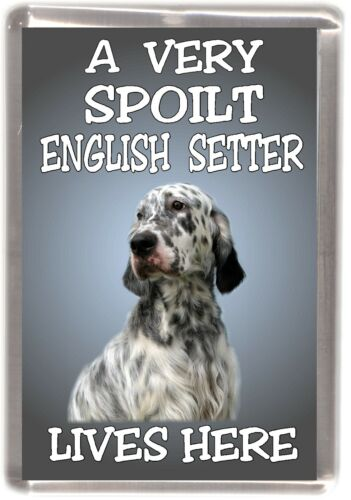 "English Setter Fridge Magnet No.1 LIVES HERE/"" by Starprint /""A VERY SPOILT ..."