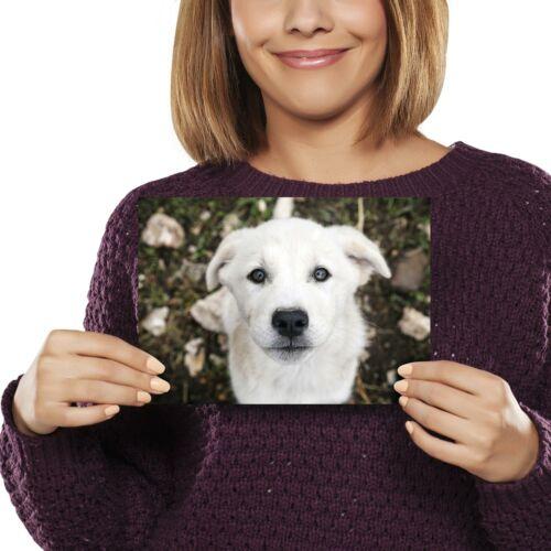 Anatolian Shepherd Labrador Dog Print 21x14.8cm 280gsm #12759 A5