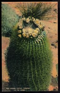 Barrel-Cactus-Visnaga-on-the-Desert-Vintage-Linen-Postcard-pc351