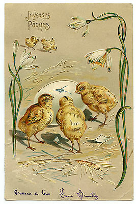 POUSSINS  GAUFRé.  CHICKS  EMBOSSED