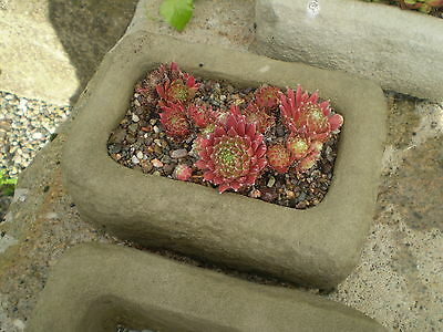 STONE GARDEN SMALL RECTANGULAR ALPINE SEMPERVIVUM TROUGH / RUSTIC PLANTER