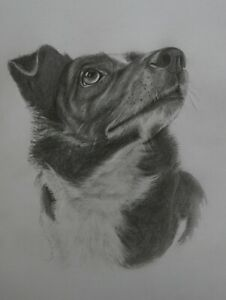 Custom portraits,Pictures from Photographs, pencil drawing, pets,people,anything