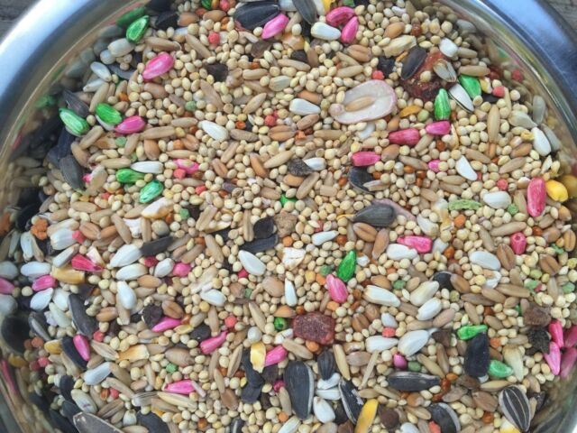 Dynasty parrot Vita cockatiel, fruits seed mix, breeders,millets,small bird food