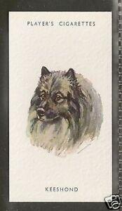 Dog Art Body Study Portrait Postage Stamp DUTCH KEESHOND Lesotho Africa MNH