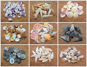 Natural Beach Shells - Home Decor  Seashells Wedding Display Craft Aquarium Sea