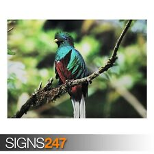 PELICAN WATER BIRD Photo Poster Print Art A0 A1 A2 A3 A4 3365 Animal Poster