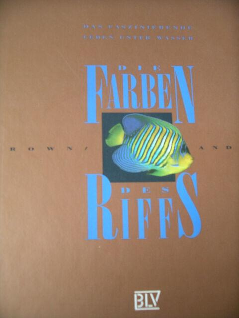 Die Farben des Riffs/Faszinierendes Leben unter Wasser /Brown und Andrews/ NEU!!