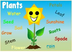 Image result for plants topic