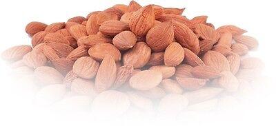 Wild Organic Apricot Kernels 12.5 lb Bulk $129.99 Free Shipping