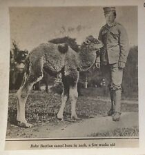 BABY BACTIAN CAMEL Montreal Park CUT & PASTE HEAD ? CANADIAN REAL PHOTO POSTCARD