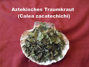 10g-250g-Aztekisches-Traumkraut-Calea-zacatechichi-Traumgras-Dream-herb