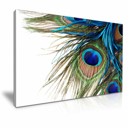 MODERN ART Peacock Feather Canvas Framed Print Wall Deco ~ More Size