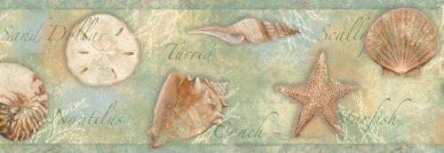 Quinten Green Seashells Toss Wallpaper Border Chesapeake BBC46052B