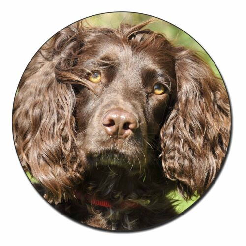 Chocolate Cocker Spaniel Dog Fridge Magnet Stocking Filler Christmas G AD-SC4FM