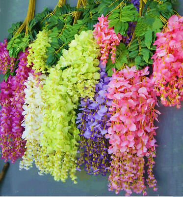 10 Wisteria Tree Seeds Mixed Decorative Colorful Perennial Creeper Plants Garden