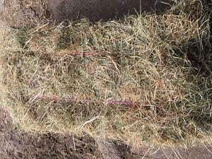 Meadow Hay Small Bales 2019. Dry Barn stored. | eBay