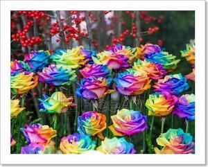 Rainbow Rose Or Happy Flower Art Print Home Decor Wall Art Poster H
