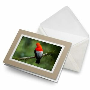 Greetings-Card-Biege-Andean-Cock-of-the-Rock-Bird-Peru-21137