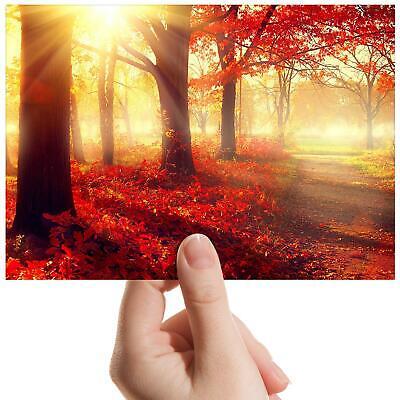 "Autumn Forest Sunset Nature Small Photograph 6/"" x 4/"" Art Print Photo Gift #8282"