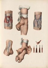 18TH C FRENCH ANTIQUE MEDICAL A3 RE PRINT CRANIO FACIAL ANATOMY  BY D/'AGOTY