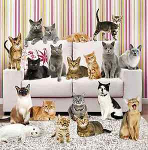 Image Is Loading Cats Blank Card Lounge Any Occasion Birthday