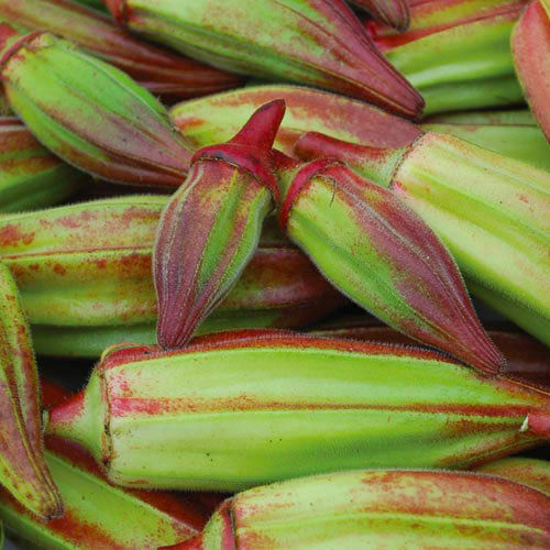 seeds Okra Hill Country Red SPECIAL DELICATESSEN! 10