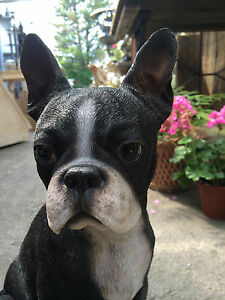 Awesome Image Is Loading Boston Terrier Sitting Boston Terrier Garden Statue Figure