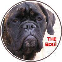 Auto Aufkleber Vom Hund - Bullmastiff - Sticker