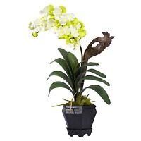 24 Vanda Orchid Silk Flower Arrangement -white