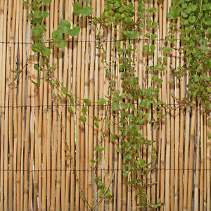 Backyard X-Scapes backyard x-scapes 6 ft. h x 16 ft. w peeled reed fencing