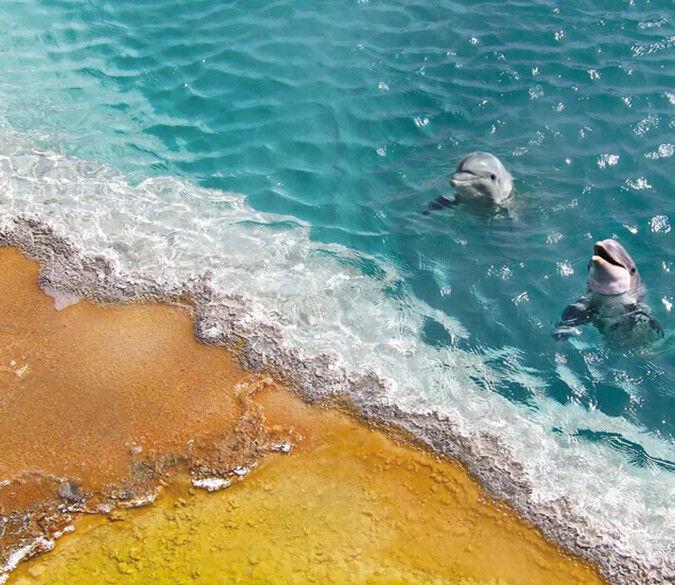 3D Beach Dolphins 755 Wall Paper Murals Wall Print Wall Wallpaper Mural AU Kyra