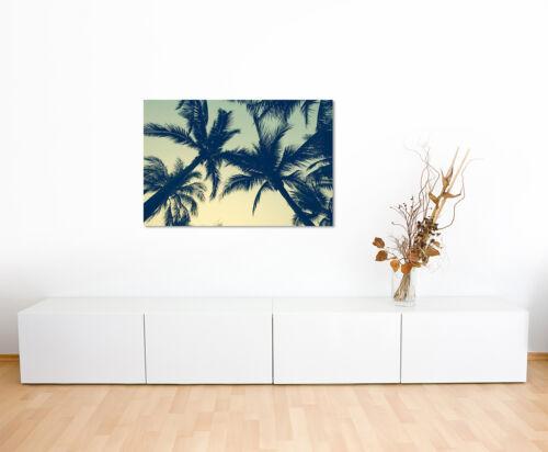 Wandbild Naturfotografie Wunderschöne Palmensilhouette auf Leinwand