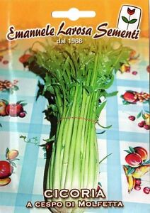 500 Semi//Seeds CICORIA A Foglie di Molfetta