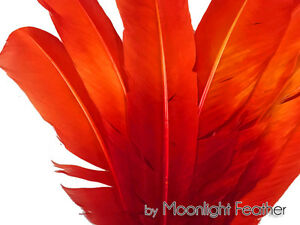 Red /& Black Two Tone Turkey Round Tom Wing Secondary Quill Feathers 6 Pieces