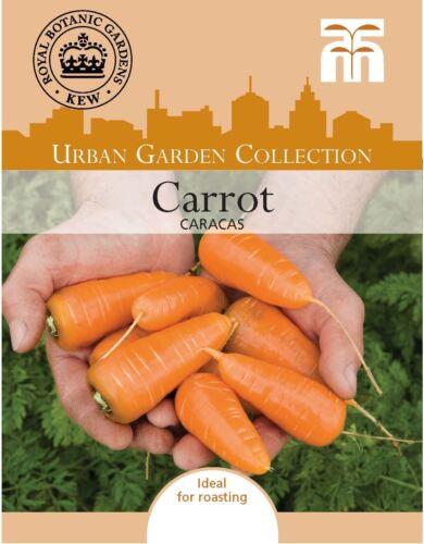 400 graines THOMPSON /& Morgan-Kew Urban Légumes-Carotte Caracas