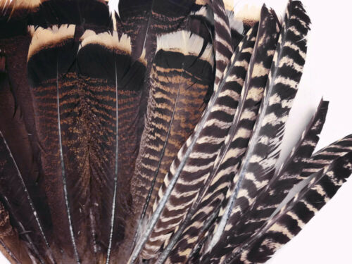 Natural Black And Brown Wild Merriam Turkey Tail Wholesale Feathers 50 Pieces
