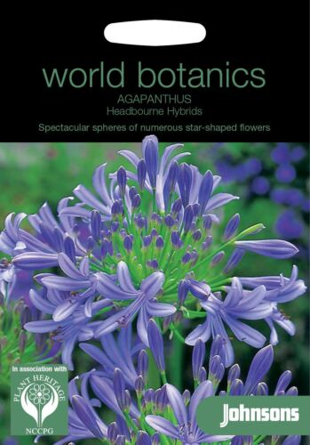Agapanthus Headbourne Hybrids 20 Seeds Johnsons World Botanics Flower