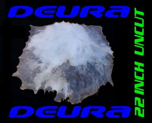 DEURA 22 UNCUT GOATSKIN REAL HEAD FOR ASHIKO DJEMBE NATIVE BODHRAN DRUM GKS2200