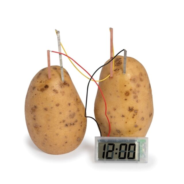 potato tuber experiment