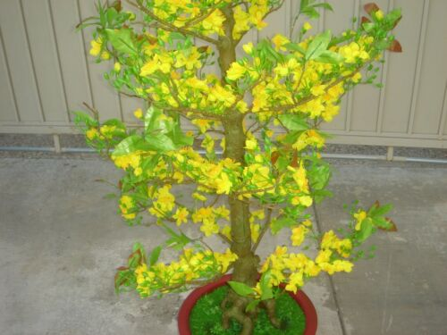 """plastic artificial yellow apricot flower tree with pot 57/"""" tall hoa mai"""