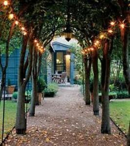 Outdoor Fairy Lights Solar Powered: Image is loading IVORY-WHITE-solar-powered-100-LED-outdoor-garden-,Lighting
